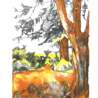 Hothorpe Hall, Tree in the Clearing. E Spiro